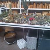 Kaktusowy raj ;)