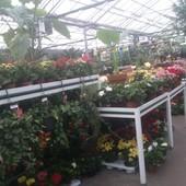 Kwiatuszki ;)