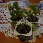 Mały ogródek