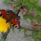 Motylkowych snów Wam życzę :)