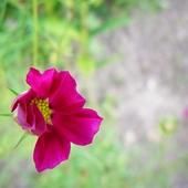 Ten skromny kwiatuszek...