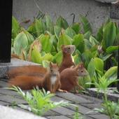 Trzy rude kitki:)
