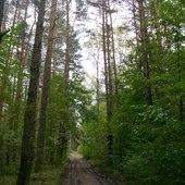 W lesie jeszcze zielono