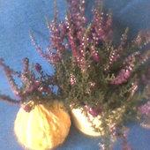 Wrzosy-jesienne dekoracje