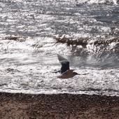 CHWILA RELAKSU DLA WAS Z NAD OCEANU