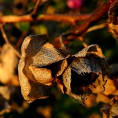 Jesienny Buziak