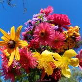 Bukiet kwiatów,dziurawiec,marcinki,rudbekia