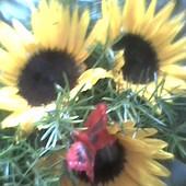 Słoneczny bukiet dla dzisiejszych jubilatów  :)