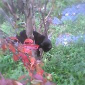 Słoneczny jesienny dzień,  więc się powspinam po drzewach :)