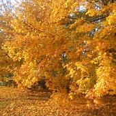 Taką jesień uwielbiam...