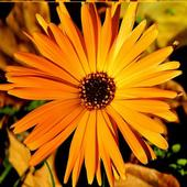 W jesiennych kolorach