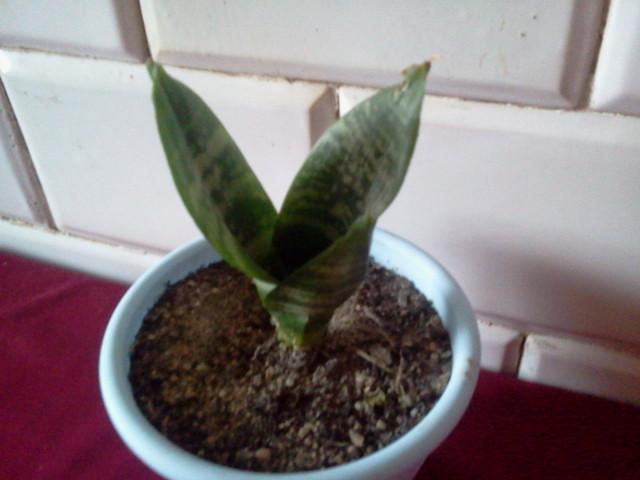 kaktusik ;)