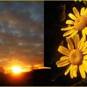 dzisiejsze słoneczka ...........