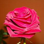RÓŻA-Królowa kwiatów