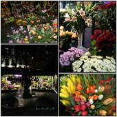 Kwiaty-Plac Solny we Wrocławiu