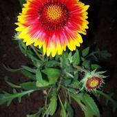 Kwiaty z działki - wspomnienie lata.
