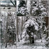 2012.12.12 zimowy widoczek