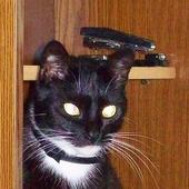 Domowa kotka Czika.