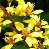 Słneczne Kwiatki Na