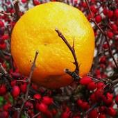 Słońca w sycylijską clementynkę zaklętą....na weekend ..winszuję