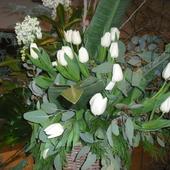 Tulipany i bez