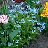 Wiosna, wiosna, wiosna ach to ty. . . . . . .