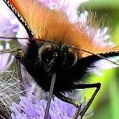 Wzrok Motyla,