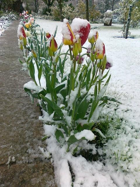 Wiosna czy zima 1