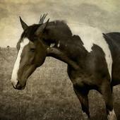 Dla tych co lubią konie ..