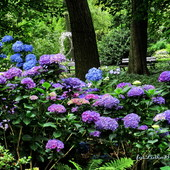 Jest tu dużo zieleni i kwiatów