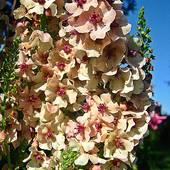 multum kwiateczków ..........