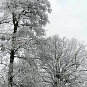 Przyszła zima biała
