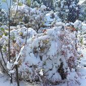śnieg 1