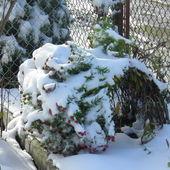 Śnieg 2