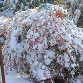 Śnieg 3