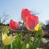 Tęsknota za wiosną