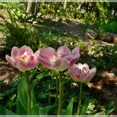 ...wiosna ach to Ty...