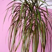 zima cięzki okres dla domowych roślin
