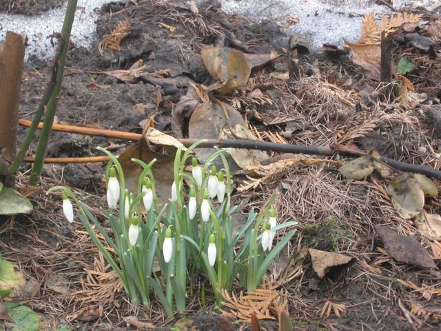 Na rozpoczęcie wiosny