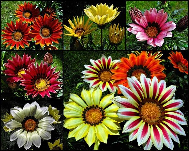 Najweselsze kwiaty lata :-)