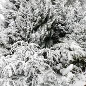 Drzewa w zimowej szacie