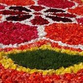 dywan z kwiatów z begonii