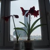 Kwiatki w domu