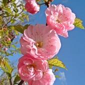 Namiastka wiosny