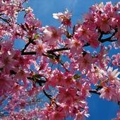 Różowe gwazdki na niebie ;-)