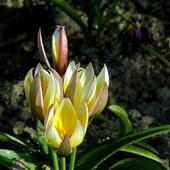 Wiosenne Maluszki