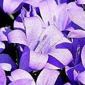 Wiosennie w kolorze lila