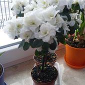 za oknem śnieg a na parapecie wiosna;)
