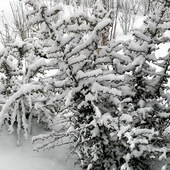 Zimowo.
