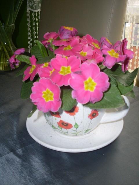 troszeczkę wiosny;)